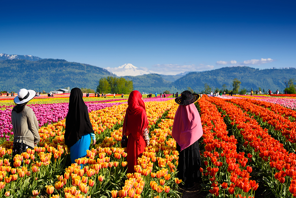 Tulip field in British Columbia