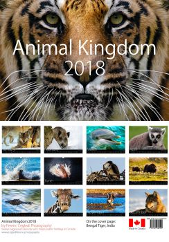 Animal Kingdom 2018 Wall Calendar